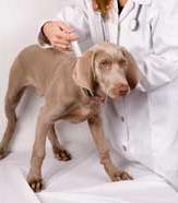 dog_vaccine